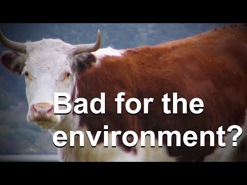 Download Youtube: Do Cow Farts Really Significantly Contribute to Global Warming?