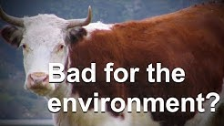 Do Cow Farts Really Significantly Contribute to Global Warming?