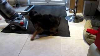 Dog Attacks Hoover