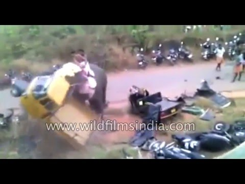 Deadly Elephant attack in India: pachyderm goes crazy!