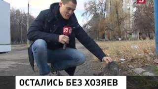В Луганске спасают бездомных животных