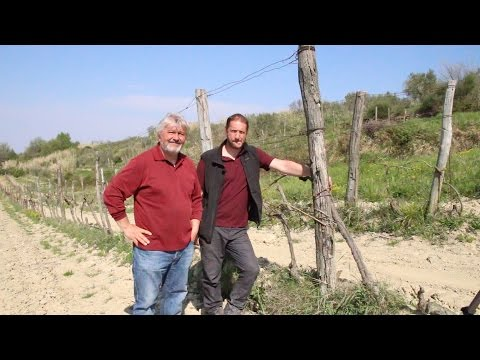 Giorgio Clai and Rise of Istrian Wine