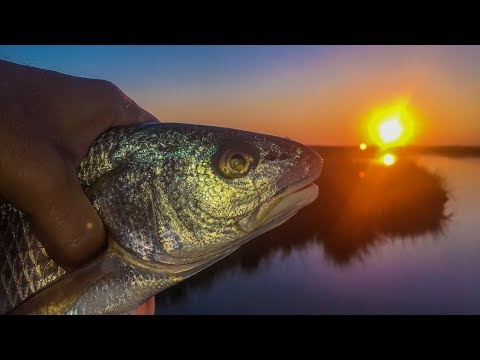 Redfish gobble this bass finesse bait in the marsh