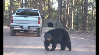 Bearizona Wildlife Park - Day 1
