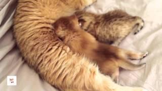Котята Лео и Том открыли глазки