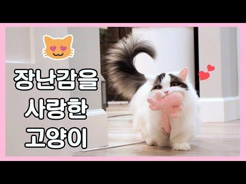 최애 장난감에서 떨어지지 않는 고양이 - 강아지니?