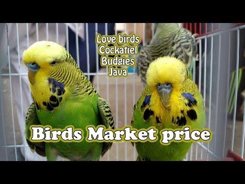 Lalukhet Birds Market price || Parrot For Sale in Good Prices || 08 Oct 2017 Karachi