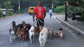 fila brasilia