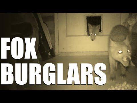 Fieldsports Britain - Fox burglars  (episode 189)