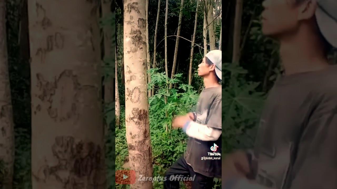 Download VIDEO TIKTOK VIRAL ORANG MUKULIN POHON TERBARU 2021||TIKTOK VIRAL