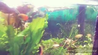 прозрачная вода в аквариуме. Как у меня получилось добиться кристальной воды