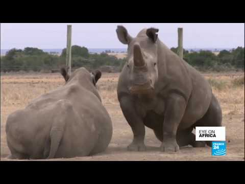 Eye on Africa: the last male north white rhino dies