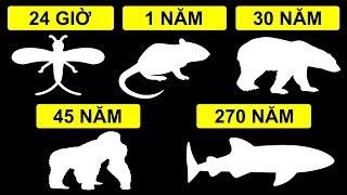 Tuổi thọ ngắn nhất và dài nhất của động vật