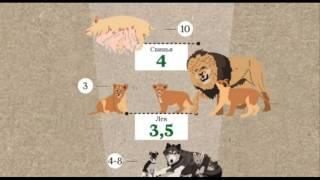 Сроки беременности у животных