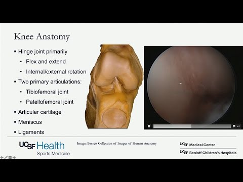 VIDEO: Regenerative and Restorative Options for Knee