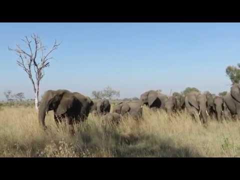 Safari in Londolozi, on our way to the International Women's Forum in Johannesburg