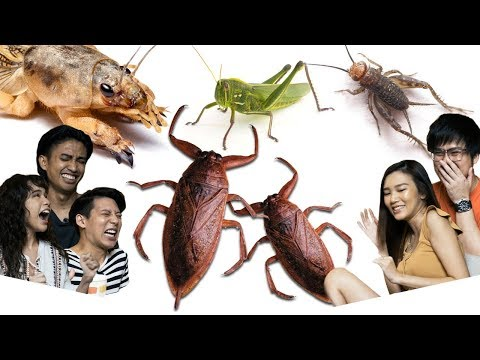 Eating Bugs From Thailand