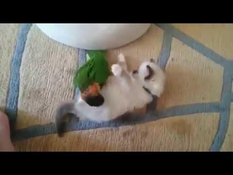 Cat Vs Parrot Unbelievable Friendship