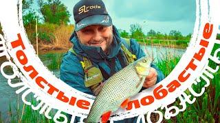 Рыбалка в мае на реке Голавль Спиннинг ПУХоваРыбалка