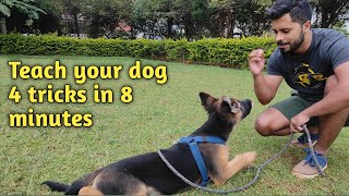How to teach your dog 4 simple tricks?   Sit   Down   Play Dead   Roll Over