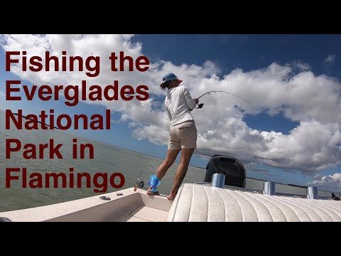 Fishing The Everglades National Park In Flamingo | Flats Fishing |