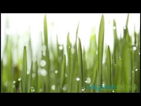 Продажа рулонного газона от производителя по приемлемым ценам. Купить газон в рулонах оптом в москве и московской области. Тел. Для связи: +7 ( 495) 00 33 783.