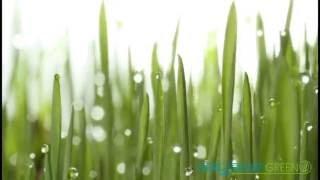 Рулонный газон. Производитель в Тольятти, Самаре. Sagama Green(, 2016-05-30T09:01:06.000Z)