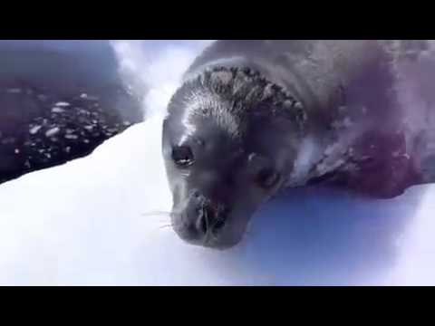 None - Now A Seal That Makes Really Weird Noises...