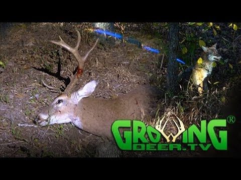 Deer Hunting the Pre Rut | Doe, Coyote, Doe, Buck! (#415) @GrowingDeer.tv