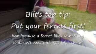 Ferret training treats: What to use