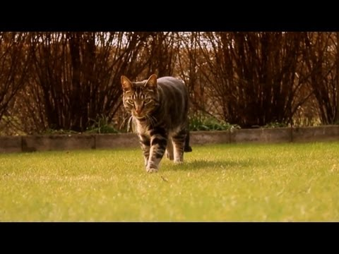 Funny Cat Videos: When Kitties Attack – Cat's Secret Antics Caught on Tape