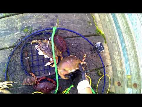 Cramping: Crabbing & Camping Newport Oregon