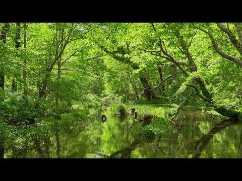 Леса России и других стран мира