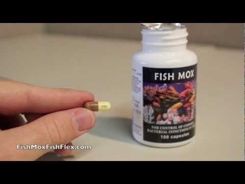 Fish Mox 250 mg Amoxicillin Fish Antibiotic 100 count bottle