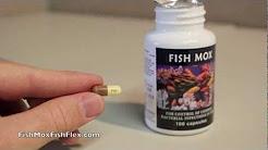 Fish Mox 250 mg Amoxicillin Fish Antibiotic 100 count bottle