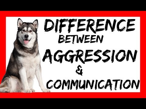 The Difference Between Dog Aggression and Natural Corrections or Play