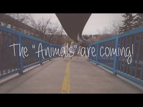 Animals Promo Video