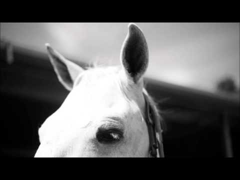 Revelation 19: Worship God, White Horse, Lord of Lords, King of Kings