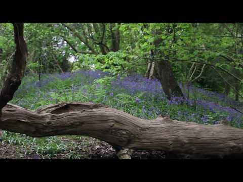 UEA Woodland Trail | Scenic Norwich