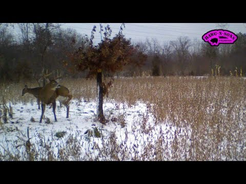 Hunting Whitetail Deer: Time Lapse Photos of Big Buck Sanctuary 2014 Oct thru Dec