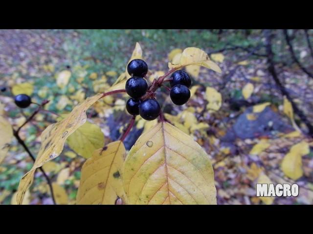 Nikon Coolpix A900 4k Video Samples Zoom Macro Youtube