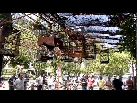 Lomba Burung Berkicau di Banda Aceh