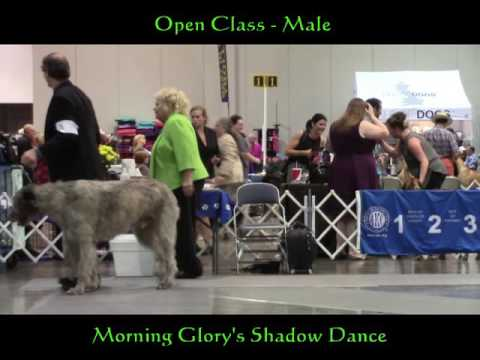 10-01-2016 Hot Springs National Park Kennel Club - Irish Wolfhounds