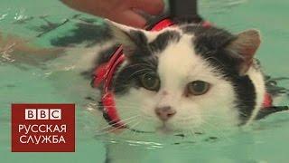 Толстый кот плавает в бассейне, чтобы похудеть