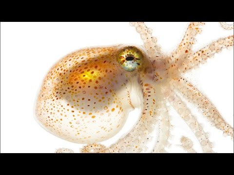 Behind the Glass Lecture | Spineless: Portraits of Marine Invertebrates