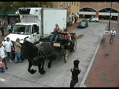 Downtown surveillance video of carriage horse escape