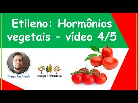 etileno:-maturação---amadurecimento-de-frutos:-efeitos-fisiológicos---agro-e-bio