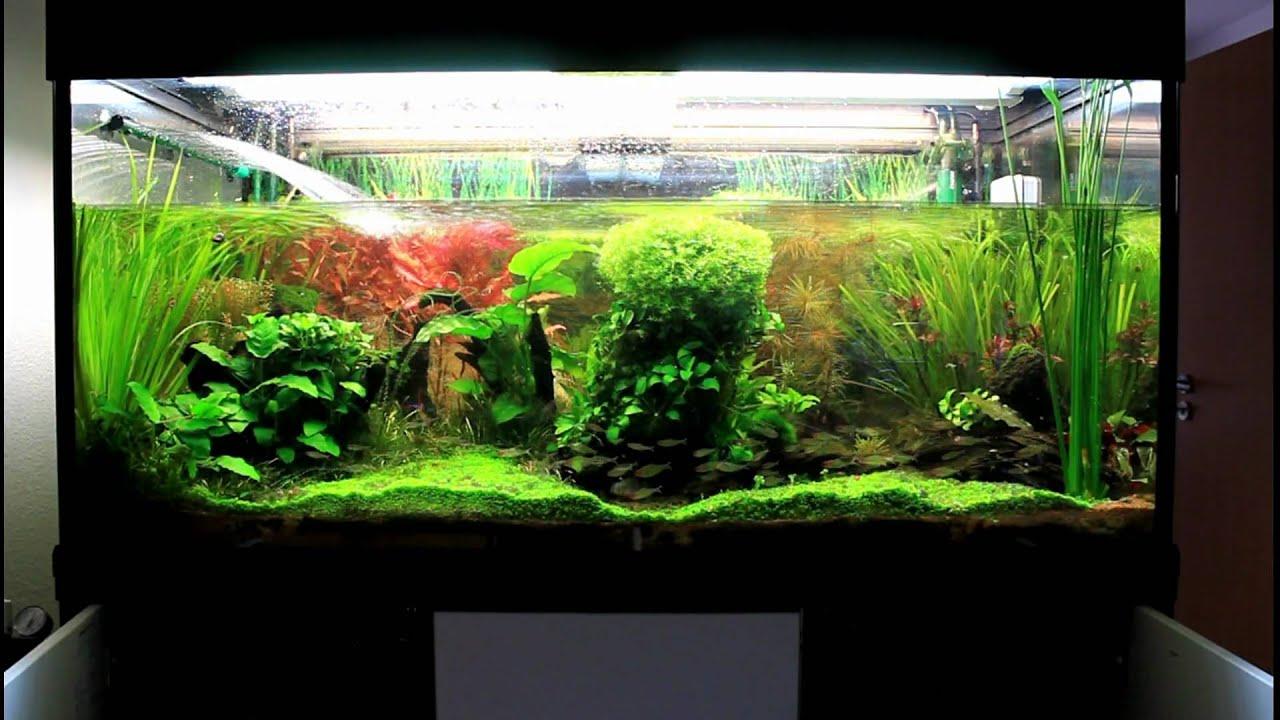 Hd 1080p automatischer wasserwechsel automatic water for Aquarium wasserwechsel