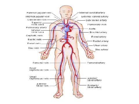 Human Anatomy Physiology Ppt Youtube