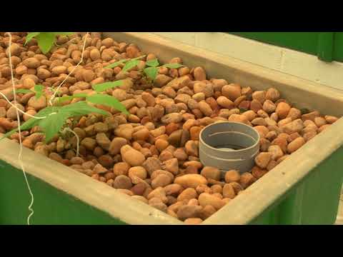 Murray Hallam visits India's largest Aquaponic project – Madhavi Farms